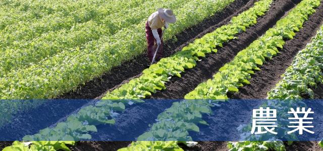農業の仕事